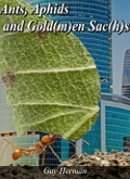 ants aphids and the goldman sachs-1